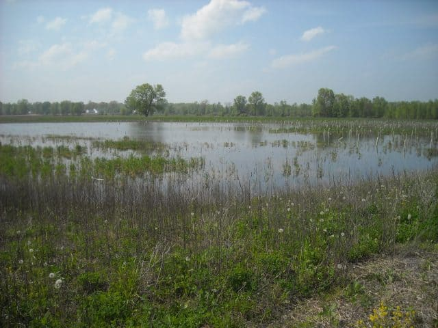 brown-county-resort-rd.-wetland-mitigation-site-5